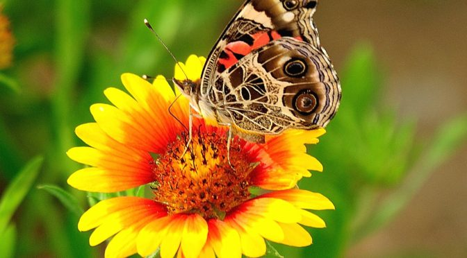 Conservation – The National Butterfly Center – Click here to learn more