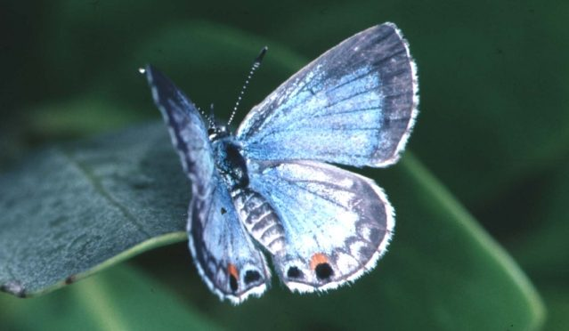 Introducing the Butterfly Habitat Network